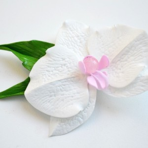 spinka - White orchid