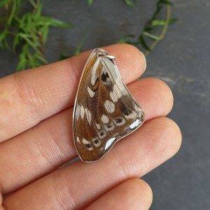 Wisiorek ze skrzydła prawdziwego motyla dwustronny 36 mm