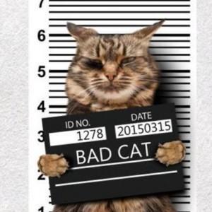 Naklejka naprasowanka na bluzkę, kurtke, torbę zły kot