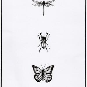 """Minimalistyczna grafika inspirowana naturą """"Owady"""""""