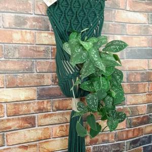 Kwietnik makrama na ścianę Klasyczny Butelkowa zieleń