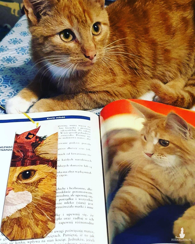 Zakładka do książki Kotek
