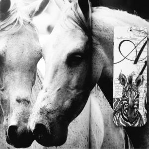 Zakładka do książki Zebra Africa