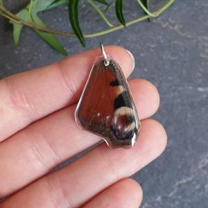 Wisiorek ze skrzydła prawdziwego motyla 31 mm